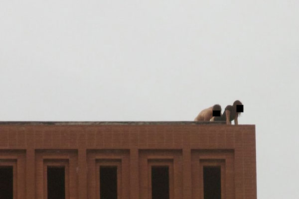 Usc sex on rooftop pictures video